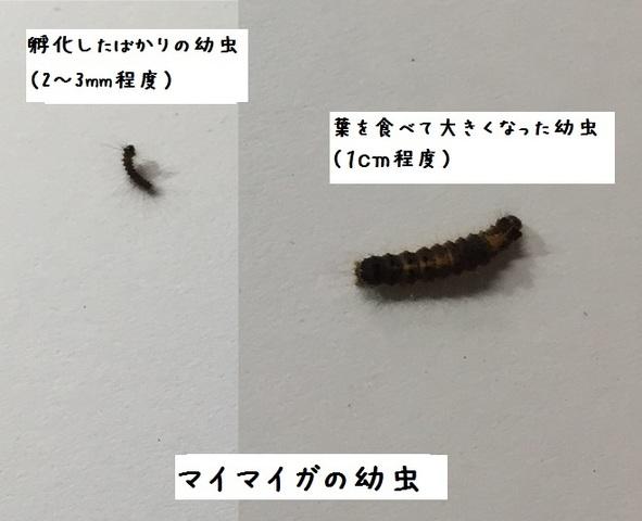 薬 毛虫 駆除 毛虫の駆除を無農薬でする方法!熱湯や木酢液の効果は?