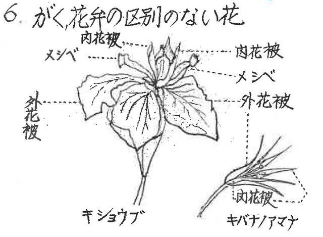 がくと花弁の区別のない花