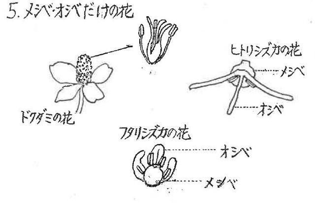 メシベ・オシベだけの花